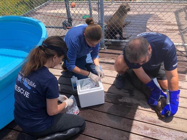 Marine Mammal Rescue