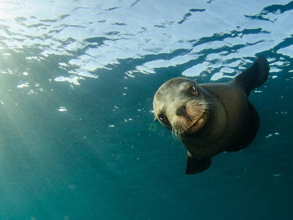 Marine Mammals - Sentinels of Ocean Health